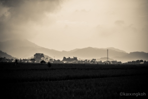 Bandung Padi Field